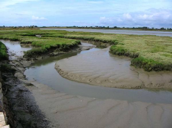 Marais maritime u golfe du morbihan